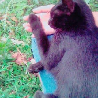 Mèo to của binssbe tại 107 Lương Ngọc Quyến, Thành Phố Thái Nguyên, Thái Nguyên - 1826691