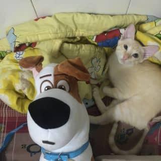 Mèo với chó  của leetopsu tại Hồ Chí Minh - 1727934