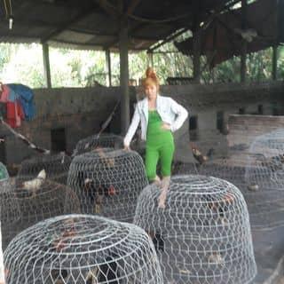 Miino nuoi ga của miinonhe tại Hồ Chí Minh - 2297710