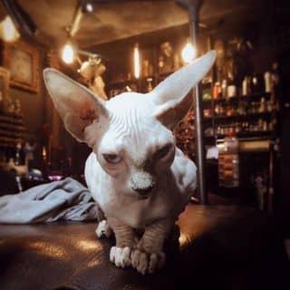 My cat 😎 so cute của stoneno1 tại 208 Đề Thám, Quận 1, Hồ Chí Minh - 971036