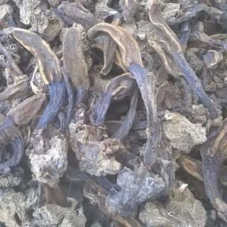Nấm ngọc cẩu bổ thận tráng dương cho nam đây của tuanen tại Sơn La - 2403417