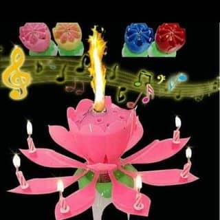 Nến sn 3d nở hoa phát nhạc của vuixinh tại Hồ Chí Minh - 2934192
