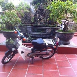 Ngựa chiến của louis.0101 tại Nam Định - 1488878