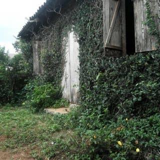 Nhà cây của hilul tại Lâm Đồng - 2355154