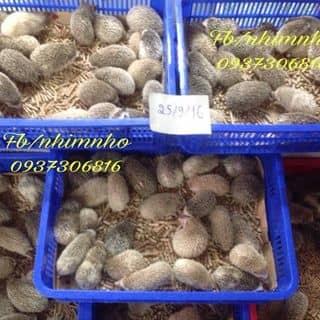 Nhím  của thucungtihon.com tại Hồ Chí Minh - 996133