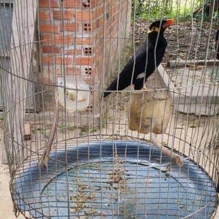 Nhong canh của nguyenthanh0304 tại Phú Yên - 3093145