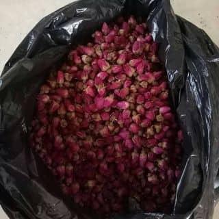 Nụ hoa hồng khô của banbuonbanlethaoduoc tại Trần Phú,  Tân Phong, Thị Xã Lai Châu, Lai Châu - 838307