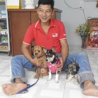Phòng khám thú y TH78 của honghanh225 tại Hồ Chí Minh - 2501656