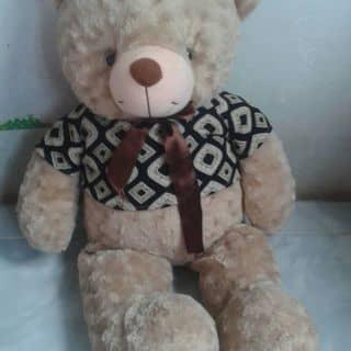 Pingsu gấu teddy của nguyentorung tại Vĩnh Long - 2209095