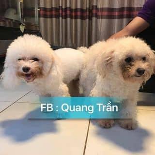 Poodle của phuonghuynh8 tại Hồ Chí Minh - 2681895