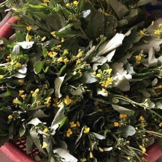 rau cải ngồng chỉ có ở điện biên của vuhongle1984 tại Him Lam, Thành Phố Điện Biên Phủ, Điện Biên - 2319307