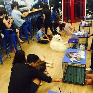 Room dog của alasdung tại Đà Nẵng - 1425517