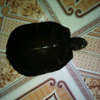 Rùa của luongdiem4 tại Cao Bằng - 3058573