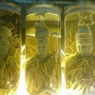Rượu đinh lăng điêu khắc ,củ 7 năm của hieunguyen0123 tại Điện Biên - 3108672
