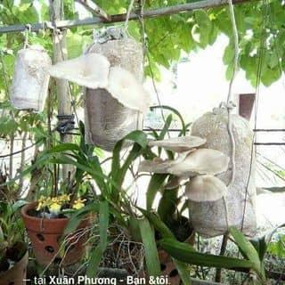 Sản phẩm đầu tay của khách của truongthiaily tại 24 Nguyễn Huệ, Thành Phố Qui Nhơn, Bình Định - 1995047