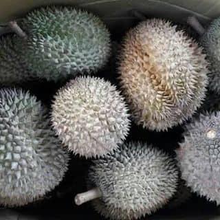 Sầu riêng DONA của duongnga16 tại 6 Hùng Vương, Thành Phố Sóc Trăng, Sóc Trăng - 1297429