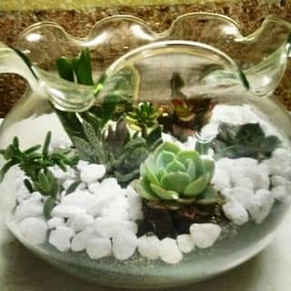 Sen đá - loài hoa tình yêu vĩnh cửu  của shophandmadecobala tại Đắk Nông - 2825415