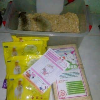 Set chọn bộ khay + thức ăn + bình nước + mùn cưa và 2 bé nhím . của zupy tại Hồ Chí Minh - 2038555