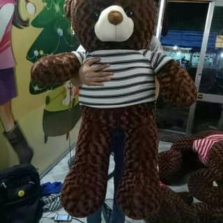 Teddy baby của dangnguyen106 tại Trà Vinh - 3595352