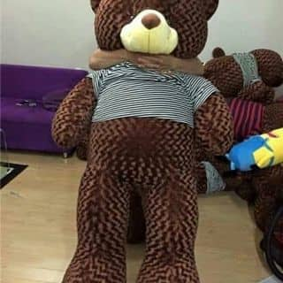 Teddy bear cực đẹp giá bèo của hoahuongduong97 tại Cần Thơ - 1665716