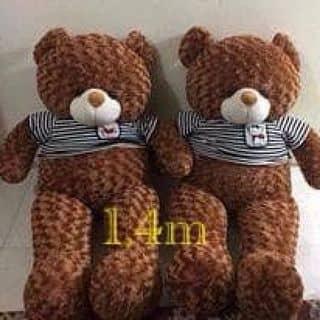 Teddy teddy của tuyetnhi882 tại Vĩnh Yên, Thành Phố Vĩnh Yên, Vĩnh Phúc - 2099716