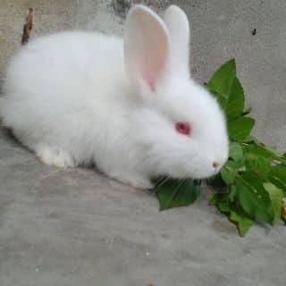 Thỏ của dq960 tại Hải Dương - 2959779