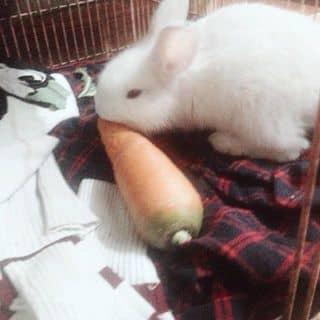 - Thỏ của hanhhhongg3 tại Bắc Ninh - 2694365
