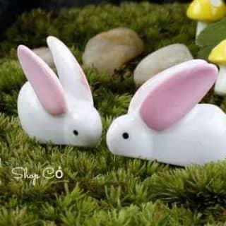 Thỏ cặp của thaothuymi tại Cần Thơ - 2045139
