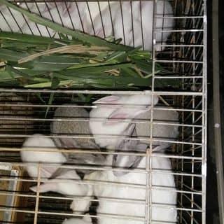 Thỏ con của baonamqn tại Quảng Ninh - 2118603