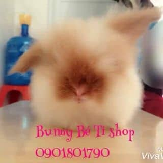 Thỏ woodtoy của wonderlandnthm tại Hồ Chí Minh - 2919678
