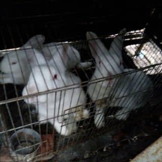 Thú cưng của trantin75 tại Kiên Giang - 2666815