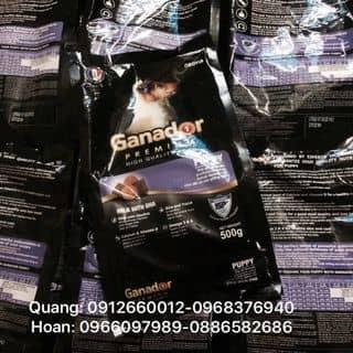 Thức ăn cho cún ganador của quanghoanyb tại Yên Bái - 3205937