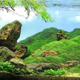 Thủy sinh của thanhtran191 tại Yên Bái - 1227833