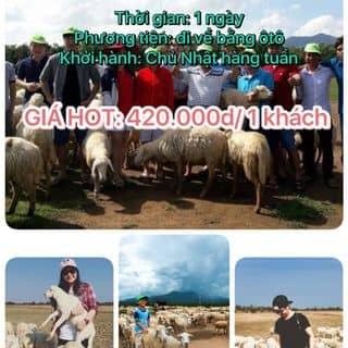 Tour du lịch ĐỒNG CỪU- Biển Cam Bình của kyoboo1205 tại Hồ Chí Minh - 1778976