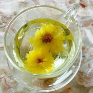 Trà hoa cúc của taobuong tại Tuyên Quang - 1776776