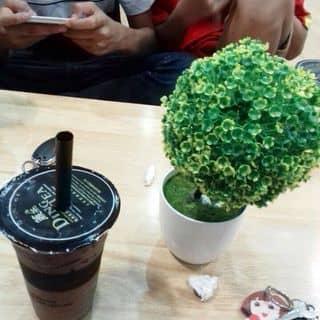 Trà sữa socola trâu châu của lethianhhang231 tại 110 Hàm Nghi, Thành Phố Hà Tĩnh, Hà Tĩnh - 1251213
