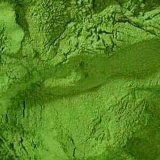 Trà xanh nguyên chất của sondao1511 tại Đà Nẵng - 1920907