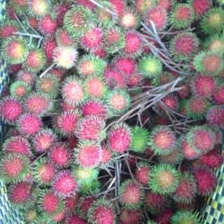 Trái cây tại vườn của quocga09 tại Chợ Trà Vinh, phường 3, Thị Xã Trà Vinh, Trà Vinh - 1124255