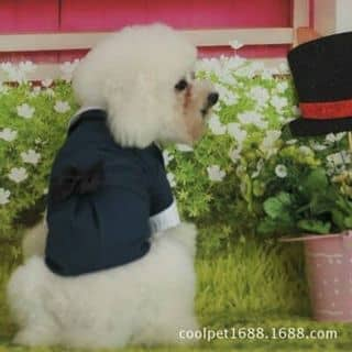 Trang phục thú cưng của hanhnhan11 tại Nghệ An - 2818854