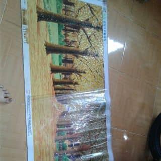 Tranh dinh da chua lam xong của gamalads tại Đắk Nông - 3195696