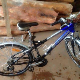 Xe đạp Asama của qmanh2001 tại Hồ Chí Minh - 1181054