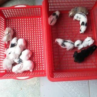 Xích thố hằng nga của chuoixanh2 tại Tây Ninh - 3155948