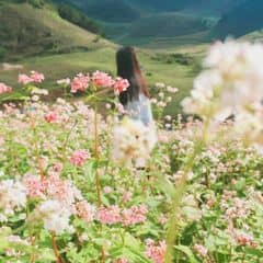 Mỹ phẩm thiên nhiên Linh Hương trên LOZI.vn