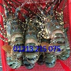 Mộc Hải Sản trên LOZI.vn