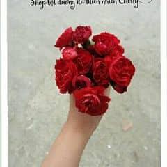 Shop Cherry trên LOZI.vn