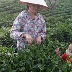 Thái Nguyên Trà Sạch trên LOZI.vn